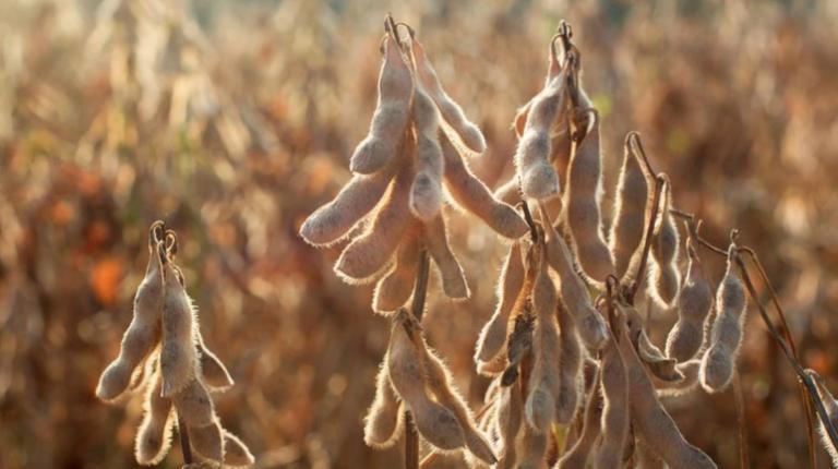 Los precios de la soja alcanzaron los valores máximos desde junio del 2018