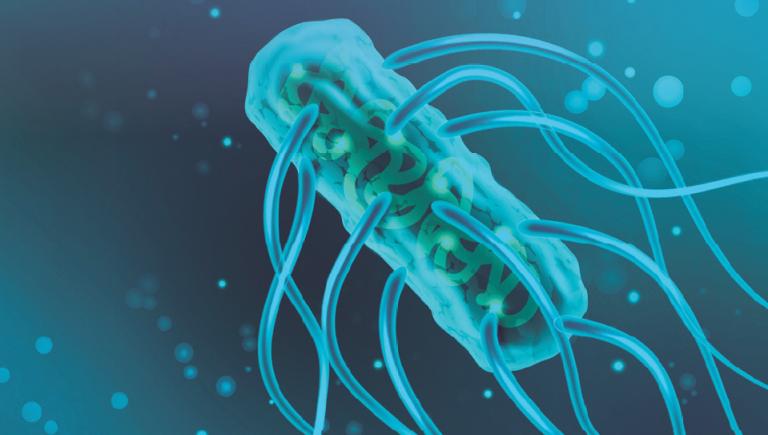 Normas de Diagnóstico & Seguimiento para detectar lotes positivos de Salmonella