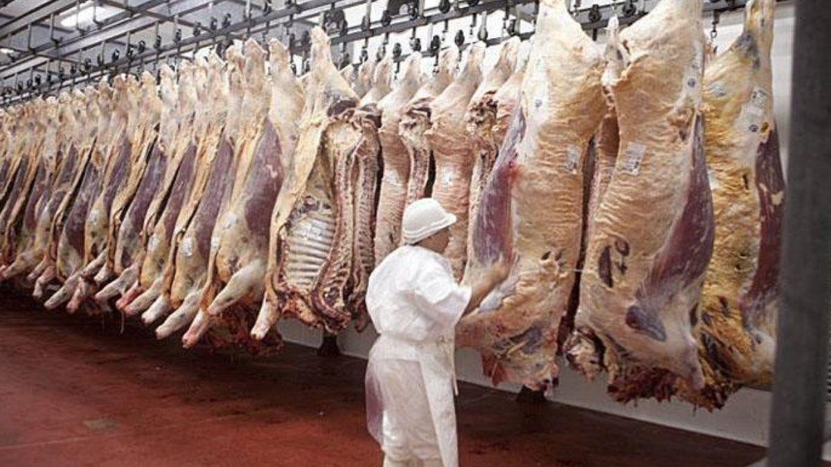 En China la industria ganadera reanuda operaciones - Cátedra Avícola