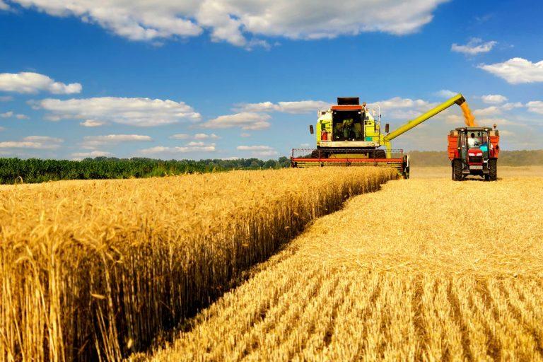 Trigo: temen que Brasil avance sobre una protección arancelaria que favorece a la Argentina