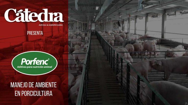 MV Franco Cangialosi de Porfenc: Manejo de ambiente en porcicultura
