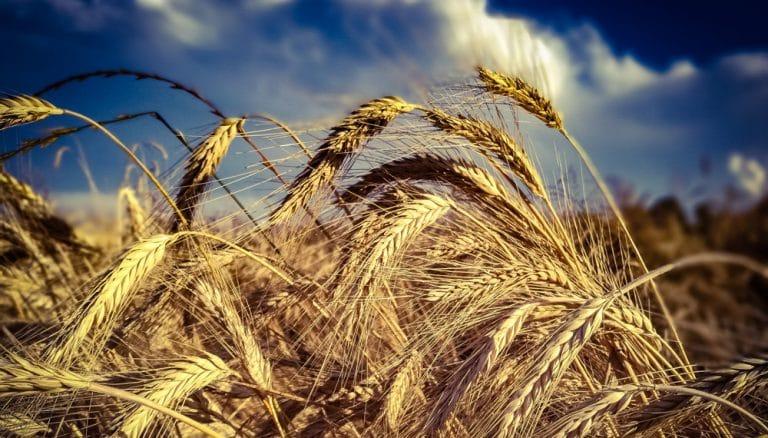 Adalberto Rossi: la Agroindustria aporta propuestas, además de consolidarse como el motor productivo de nuestro país