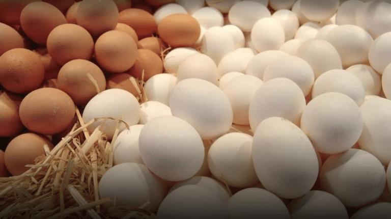 Lograr generar estabilidad en el mercado avícola ¿Es posible?