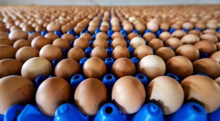 Actualidad de la industria del huevo: Precio vs. Eficiencia