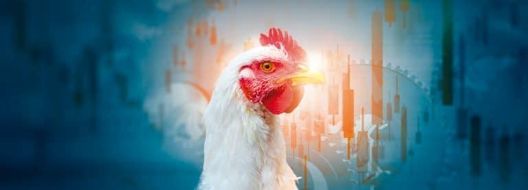 Preocupación en la industria avícola por el fuerte incremento de costos