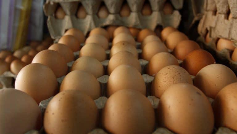 Huevo para consumo: La eminente caída del precio vs alza en los costos de producción