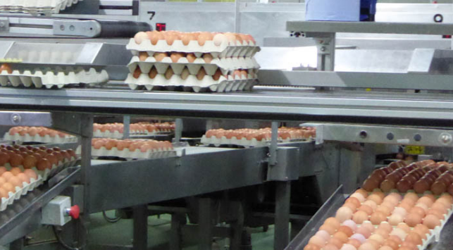 España: El huevo, protagonista de un sector resiliente que factura 788 millones