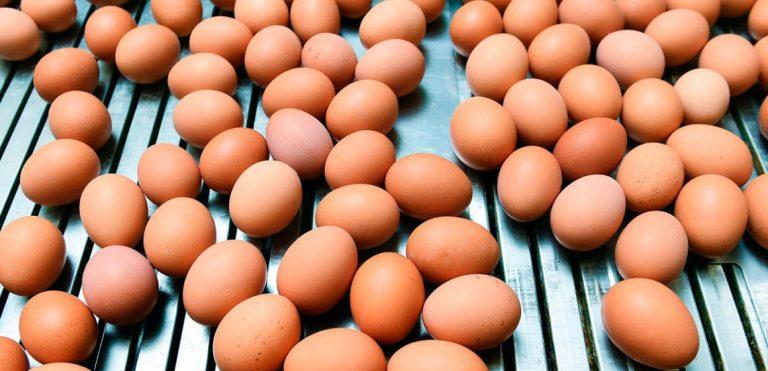 Hablemos de calidad de huevo