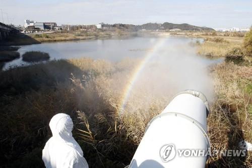 Corea del Sur confirma su segundo caso de gripe aviar altamente patógena en una granja