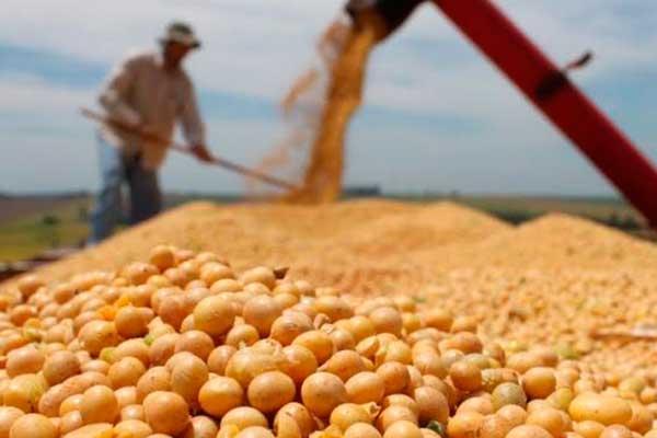 Bolivia: Avicultores esperan que no poder exportar libremente estabilice el precio de la harina de soja