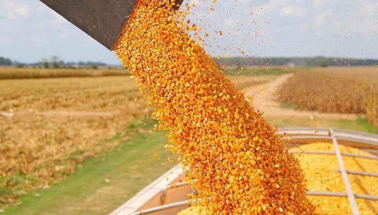 El gobierno oficializa la reapertura de las exportaciones de maíz