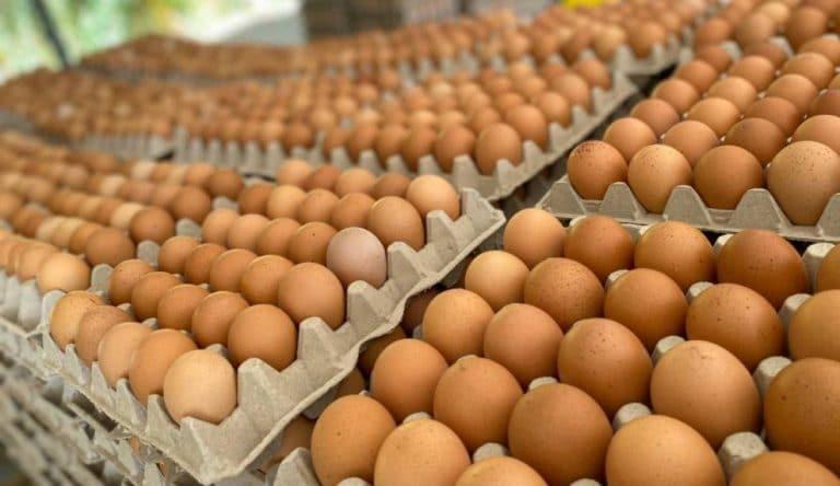 ¿ Se recupera el precio del huevo ?
