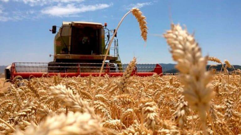 Atraso en las compras de trigo para industrializar por parte del sector molinero