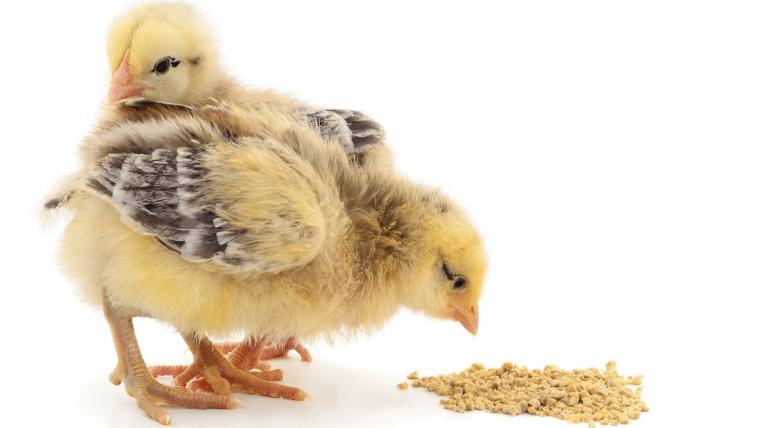Alltech y las enzimas en la nutrición para aves: Una tecnología para reducir los costos